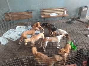 AFA cuida de aproximadamente 160 animais e pede doações à população DIEGO FERNANDES