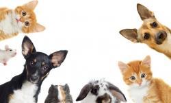 O ESFORÇO QUE OS ANIMAIS FAZEM PARA SE COMUNICAR CONOSCO