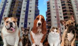 ANIMAIS EM CONDOMÍNIOS E PRÉDIOS RESIDENCIAIS