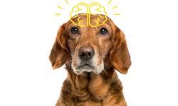 A NEUROCIÊNCIA COMPROVOU - os animais têm consciência