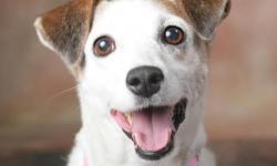 POR UM CASO DE AMOR - professor desprezava cão vira-lata que o salvou em momento de dor