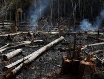 MPF quer esclarecimentos do governo Bolsonaro sobre questão ambiental