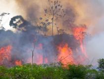 Área desmatada na Amazônia aumenta quase 30% entre agosto de 2018 e julho de 2019