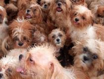 Diretoria do Bem-Estar Animal resgata 66 animais de canil clandestino em Rio Preto
