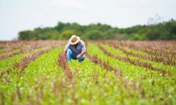Em tempo de pandemia, produção no campo não para e garante abastecimento