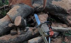 Câmara aprova novas regras para autorização de cortes de árvores