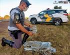 Polícia Rodoviária do TOR prende indivíduo com drogas em bagagem em ônibus, na Rodovia Marechal Rondon