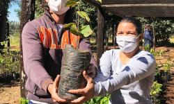Produção e manejo de mudas nativas para reflorestamento é tema de curso gratuito