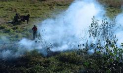 Aprovado pedido sobre cumprimento da lei que proíbe queimadas