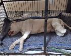 Cachorro tem patas decepadas e boca amarrada com arame farpado em MG
