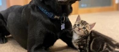 Cadela acolhe e cria sete gatinhos órfãos resgatados na beira de estrada