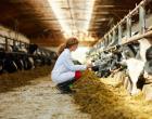 Programa Mais Leite Saudável já beneficiou mais de 80 mil produtores