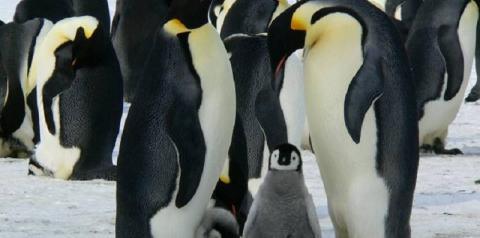Quais animais sobreviverão em uma Antártica cada vez mais quente?
