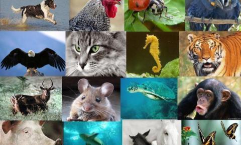 O FIM DA TEORIA MECANICISTA EM RELAÇÃO À VIDA DOS ANIMAIS