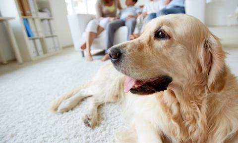 Podemos ter animal de estimação em condomínio?