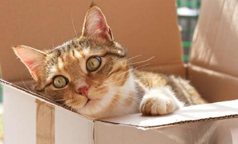 Por que os gatos adoram caixas?