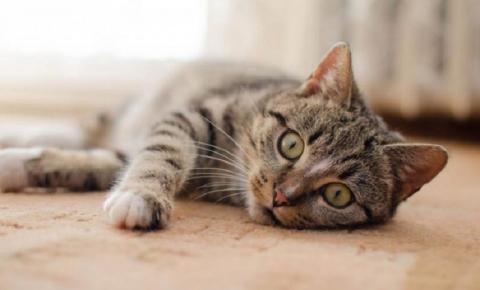 Gatos: guia de cuidados para filhotes, adultos e idosos