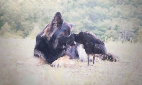 Fotógrafa registra intensa e cativante amizade entre cadela e pato
