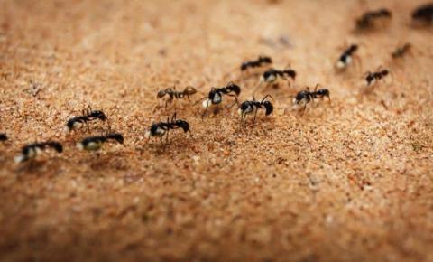 Saiba como acabar com as formigas da sua casa