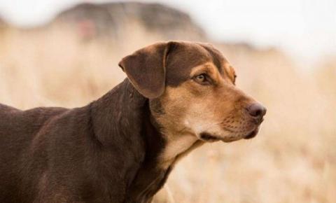 Cadela do filme 'A Caminho de Casa' foi adotada em abrigo para animais