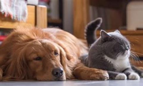 Saiba como funciona o serviço de Disque Denúncia Animal