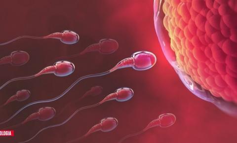 Nova técnica de seleção de espermatozoides pode prejudicar nascimento de meninas