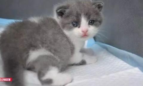 Conquista científica: China clona o primeiro gato