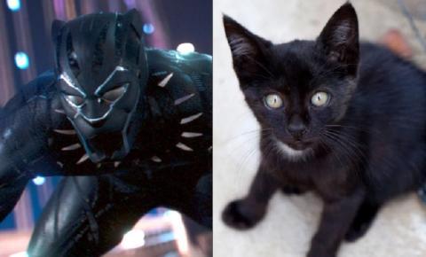 """Filme """"Pantera Negra"""" incentiva adoção de gatos pretos"""