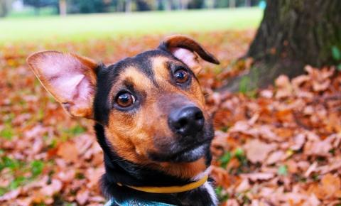 Limpeza, hidratação e reequilíbrio do pH das orelhas auxiliam prevenção da otite em cães e gatos