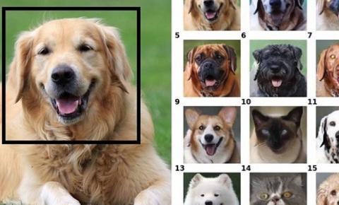 Tecnologia da NVIDIA coloca o sorriso do seu pet em outro animal