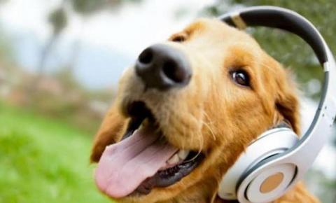 Spotify lança playlist para animais de estimação