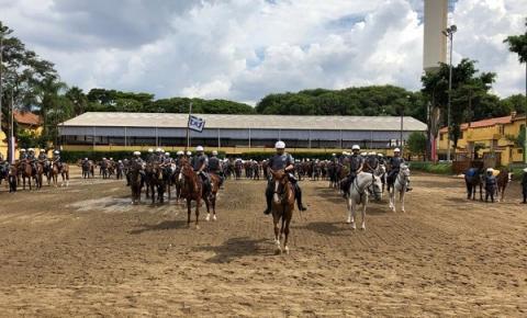 Cavalaria da Polícia Militar adquire  100 novos Solípedes
