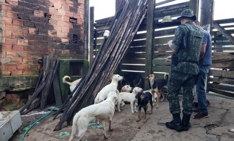 Polícia Militar salva  21 cães das mãos de infrator que os maltratava