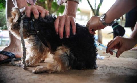 Governo Federal alerta para uso de vacina contra coronaviroses indicadas para animais