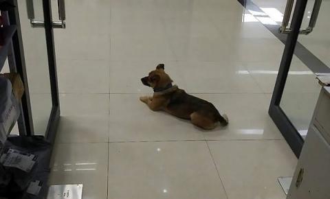 Cãozinho espera há três meses na porta de hospital por tutor que morreu de Covid-19