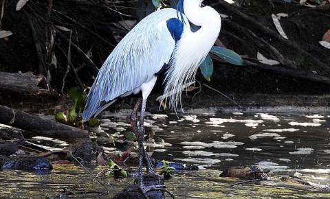 Secretaria de Meio Ambiente de Araçatuba inicia inventário da fauna silvestre em áreas urbanas.