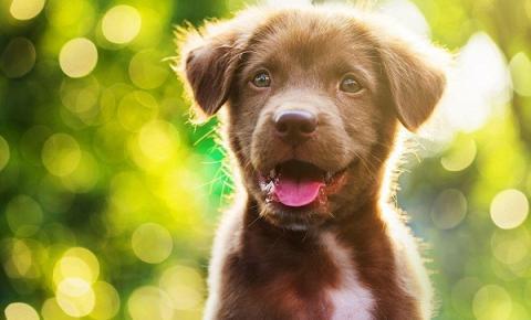Pet novo em casa: cuidados que devem ser tomados