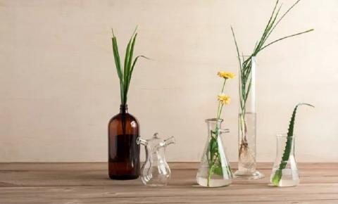 Cuidado natural: 10 plantas medicinais para cultivar em casa