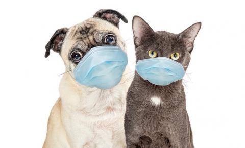 Covid-19: EUA estão próximos de ter vacina para animais domésticos