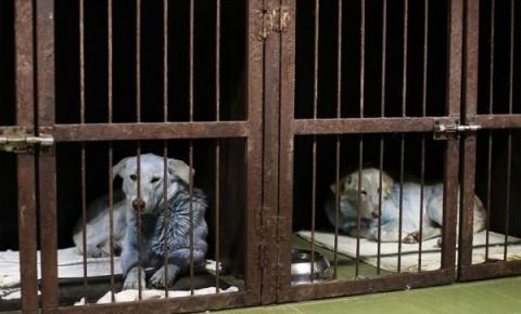 Cães abandonados com pelagem azul são encontrados perto de indústria química