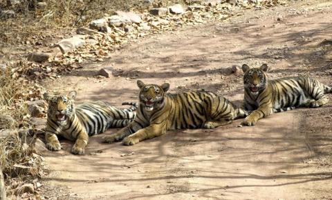Índia constrói corredores ecológicos para evitar mortes de animais