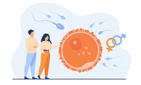 Reprodução humana: gravidez, medicina fetal e parto