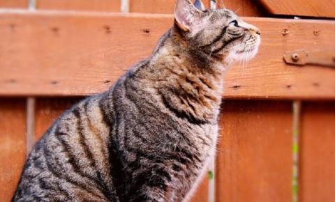 Gato volta para casa depois de três anos desaparecido