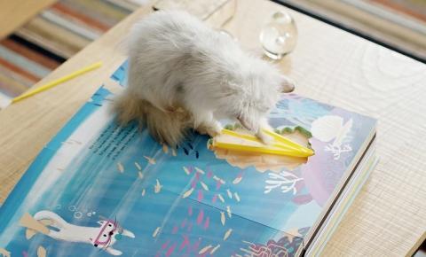 Primeiro livro que tem brinquedos para gatos nas folhas é lançado