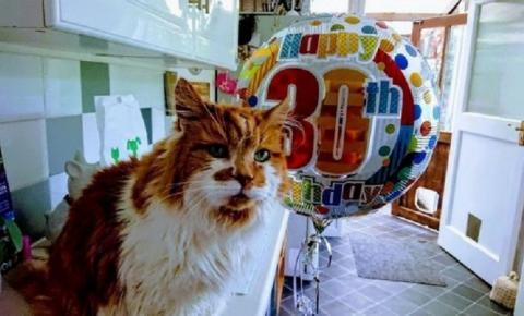 Gato considerado o mais velho do mundo completa 30 anos