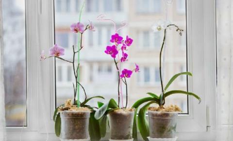 Decore sua casa com orquídeas e deixe os ambientes mais charmosos