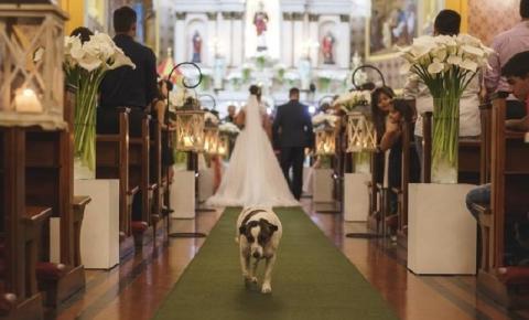 Cão que frequenta eventos da igreja faz sucesso nas redes sociais