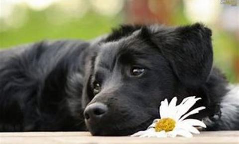 Baixa umidade também prejudica a saúde dos pets
