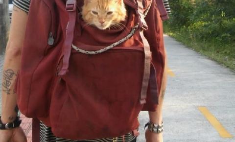 Gato adotado por artista de rua gosta de passear dentro de mochila