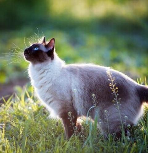 Coisas que valem a pena saber sobre os gatos